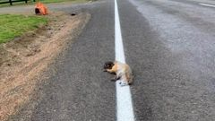 The possum was painted over. Photo / Supplied