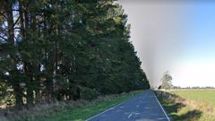 The Christchurch man punched a contractor over tree-treeming. Photo / Google