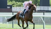 Racing editor on the 'disproportionate' number of horses that die at Melbourne Cup