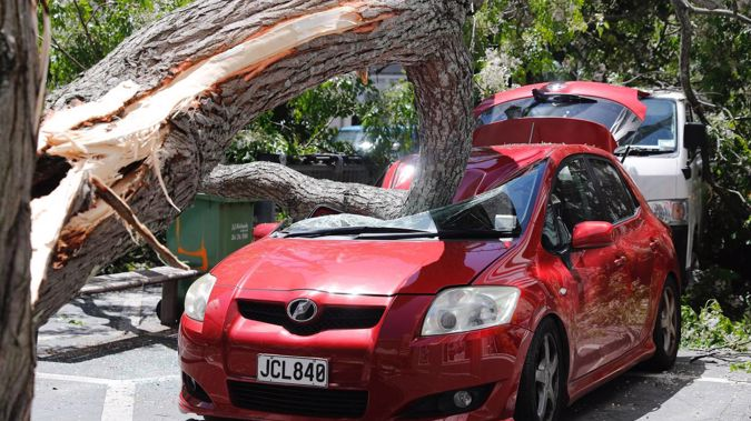 The falling tree seriously damaged a car parked in St Patrick's Square. (Photo / Dean Purcell)