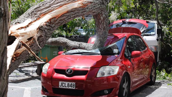 Snapped tree crushes parked car in Auckland CBD