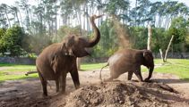 'Heartbreaking decision': Auckland Zoo loses its beloved elephants