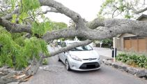 'It could have killed someone': Tree ploughs into car, couple left shaken