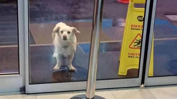 When Cemal Senturk was transferred to Medical Park Hospital, his dog, Boncuk, escaped and followed him to the hospital, where she waited each day. (Photo / Supplied)