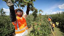 Judith Collins wants more to be done to fix fruit picking shortage