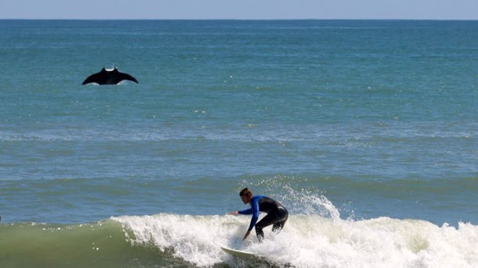 Rusty Escandell says he noticed a little splash while taking pictures of surfers in Satellite Beach, Florida, but he didn't know that a huge manta ray had jumped out of the water until he looked at the photos at home. (Photo / Rusty Escandell via CNN)