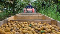 Kiwifruit industry hopes travel bubble will be good news for seasonal workers