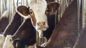 Mike's Minute: Live export ban wrecks a growing industry