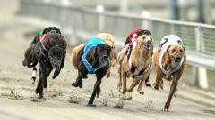 Greyhound racing at Addington last year. Photo / Photosport