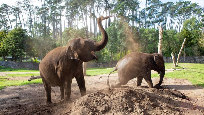 Auckland Zoo's elephants to be separated as their new homes are revealed