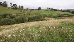 Rural land deals, including leasing, require consent. Photo / File