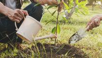 Ruud Klein: Growing fruit in small spaces