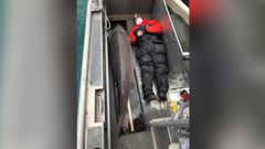 The fish, assumed to be female, was caught in the Detroit River. (Photo / CNN)