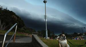Storm thrashes Sydney