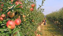 One way quarantine free travel for seasonal workers starts next week