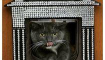 PHOTOS: Expensive pet accessories