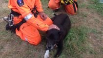 Dog rescued after tumbling down cliff
