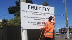 Ban in place after fruit fly found in Auckland