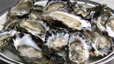 Allyson Gofton: Glorious Oysters