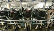Grim forecast expected for dairy farmers