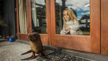 Contactless delivery: Baby seal knocks on door of Hawke's Bay home