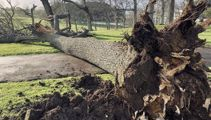'Prepare for morning without power' - Wild winds hammer Auckland