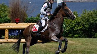 Swiss horse euthanised on Olympic course after suffering equestrian injury