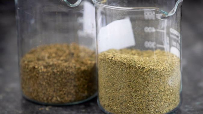 Cannasouth's plan to buy the remaining 50 per cent of Cannasouth Cultivatoin has fallen through. Photo / NZ Herald
