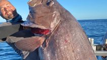 Massive bass fish caught off Hicks Bay, East Cape