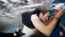 'He got wrecked': Jackass star attacked by shark after stunt goes wrong