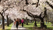 Mike Yardley: Spring Fever in the Garden City