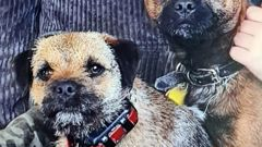 Border terriers Floss (left) and Scruff before they went missing. (Photo / Supplied)